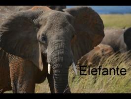 elefante-słoń