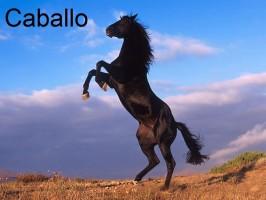 koń-caballo