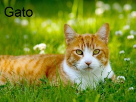 kot-gato