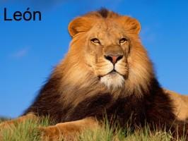 lew-leon