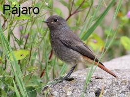 ptak-pajaro